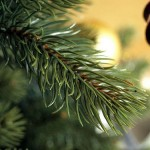 PLASTIFLORのクリスマスツリー導入!