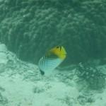 海パンで泳げる12月の沖縄!